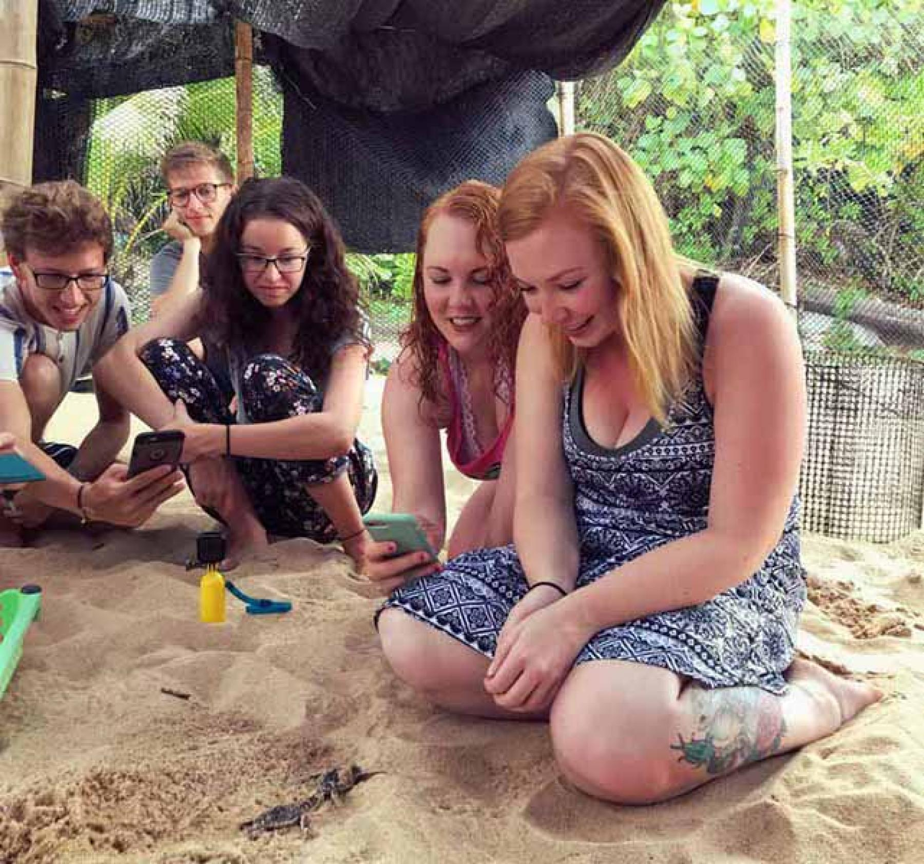 5D4N Volunteer for Baby Sea Turtles, Cats, Kittens + Try Diving starting at Tioman Island, Mersing, Pahang, Malaysia