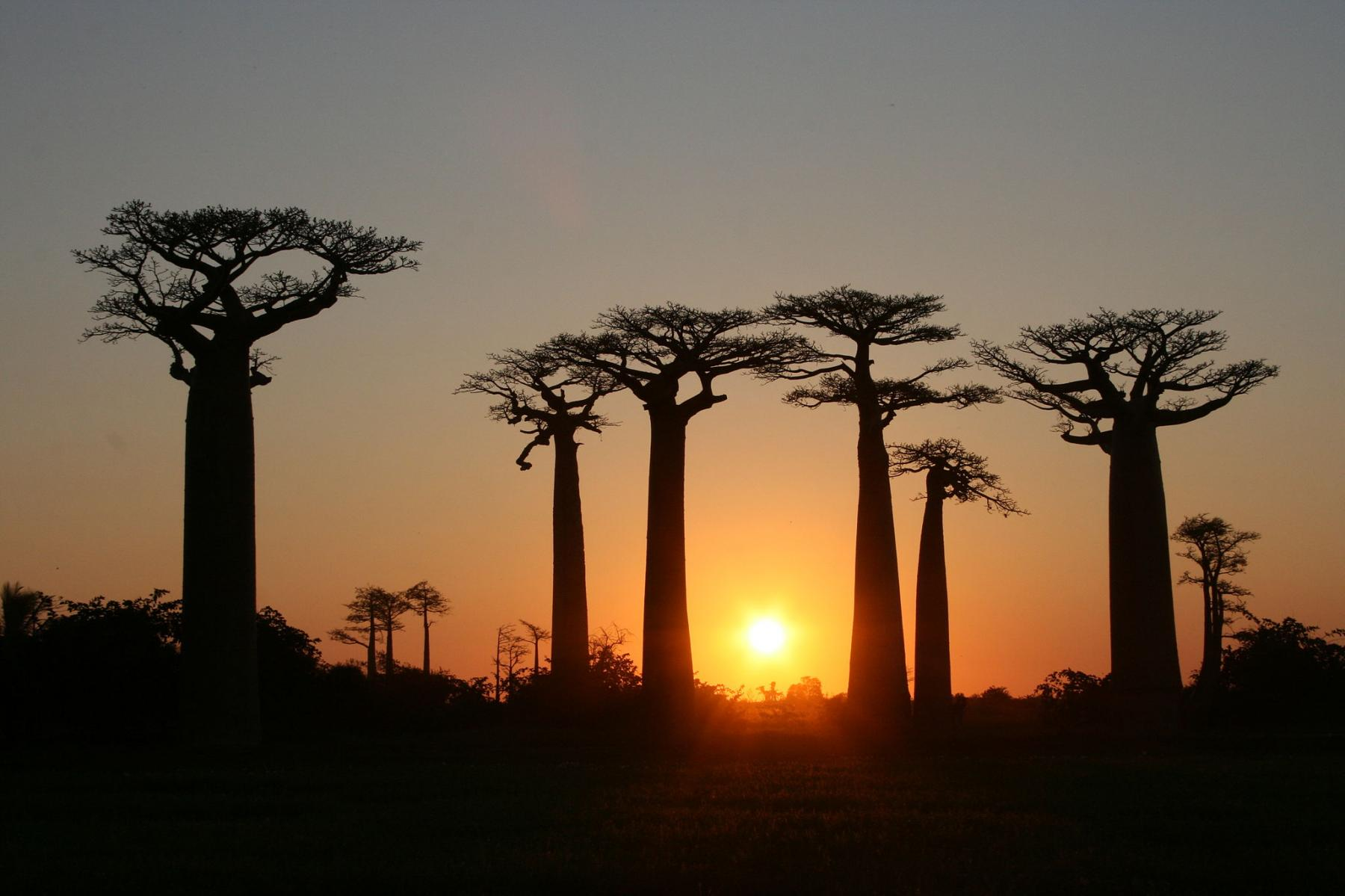 Let's visit the 4th largest island in the world - Madagascar starting at Madagascar
