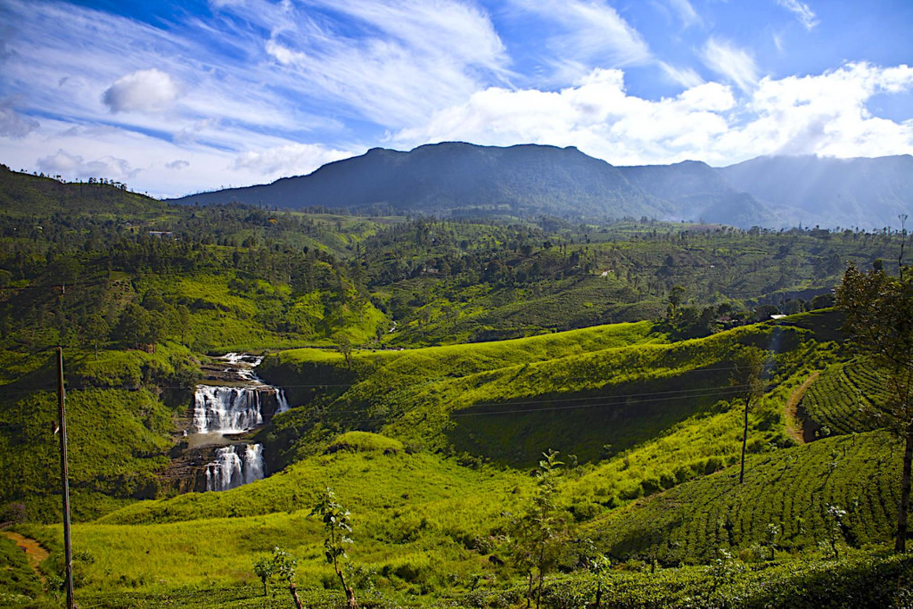 Essential Sri Lanka ! - Hill Country & Wildlife Adventure starting at Colombo, Western Province, Sri Lanka