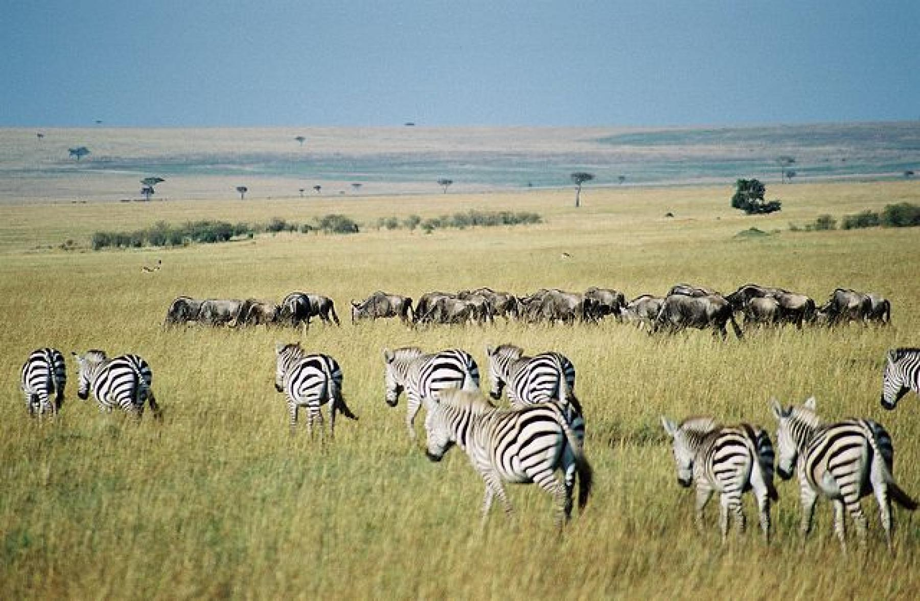 Masai Mara - Experience the greatest wildlife show and migration in Africa starting at Nairobi City County, Nairobi, Kenya