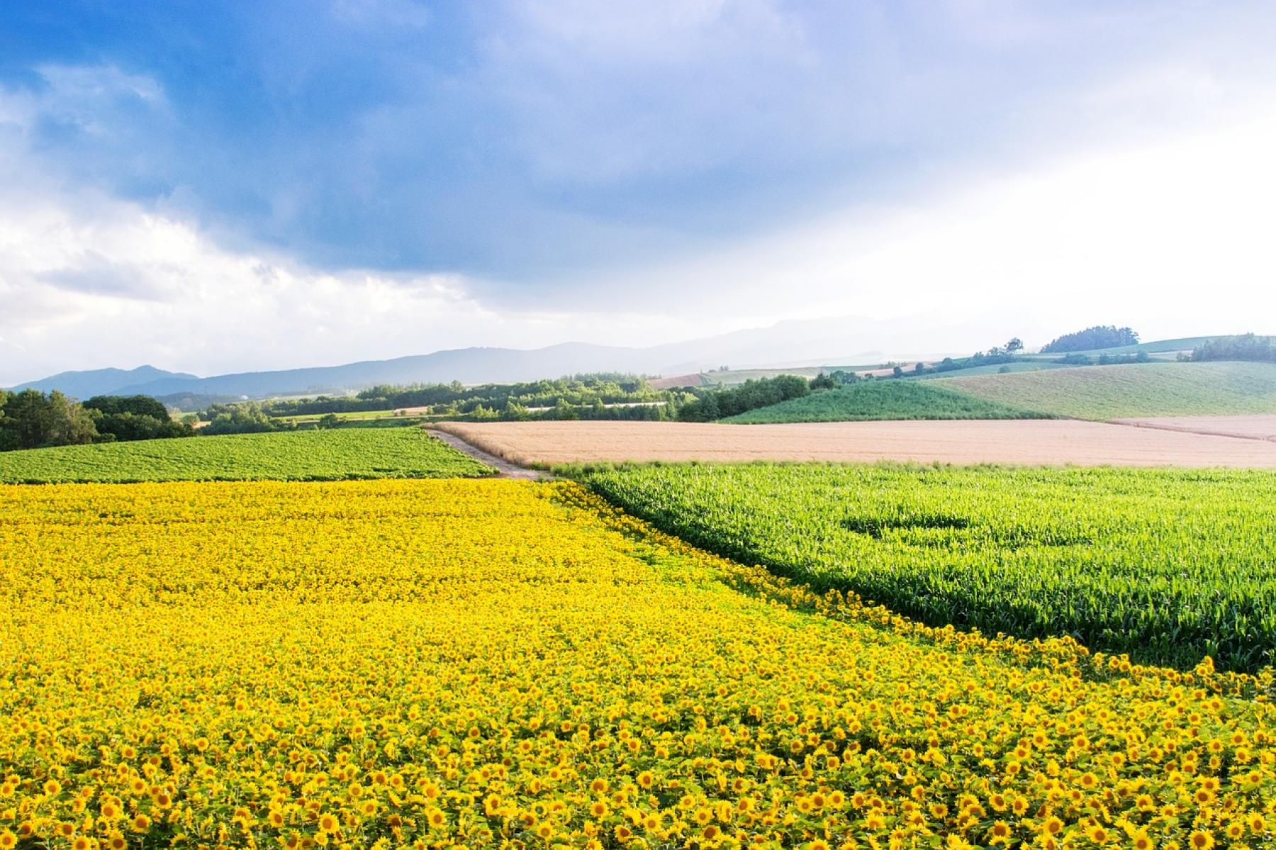 Meet the wildlife and walk the flower fields - Eastern Hokkaido starting at Sapporo, Hokkaido, Japan