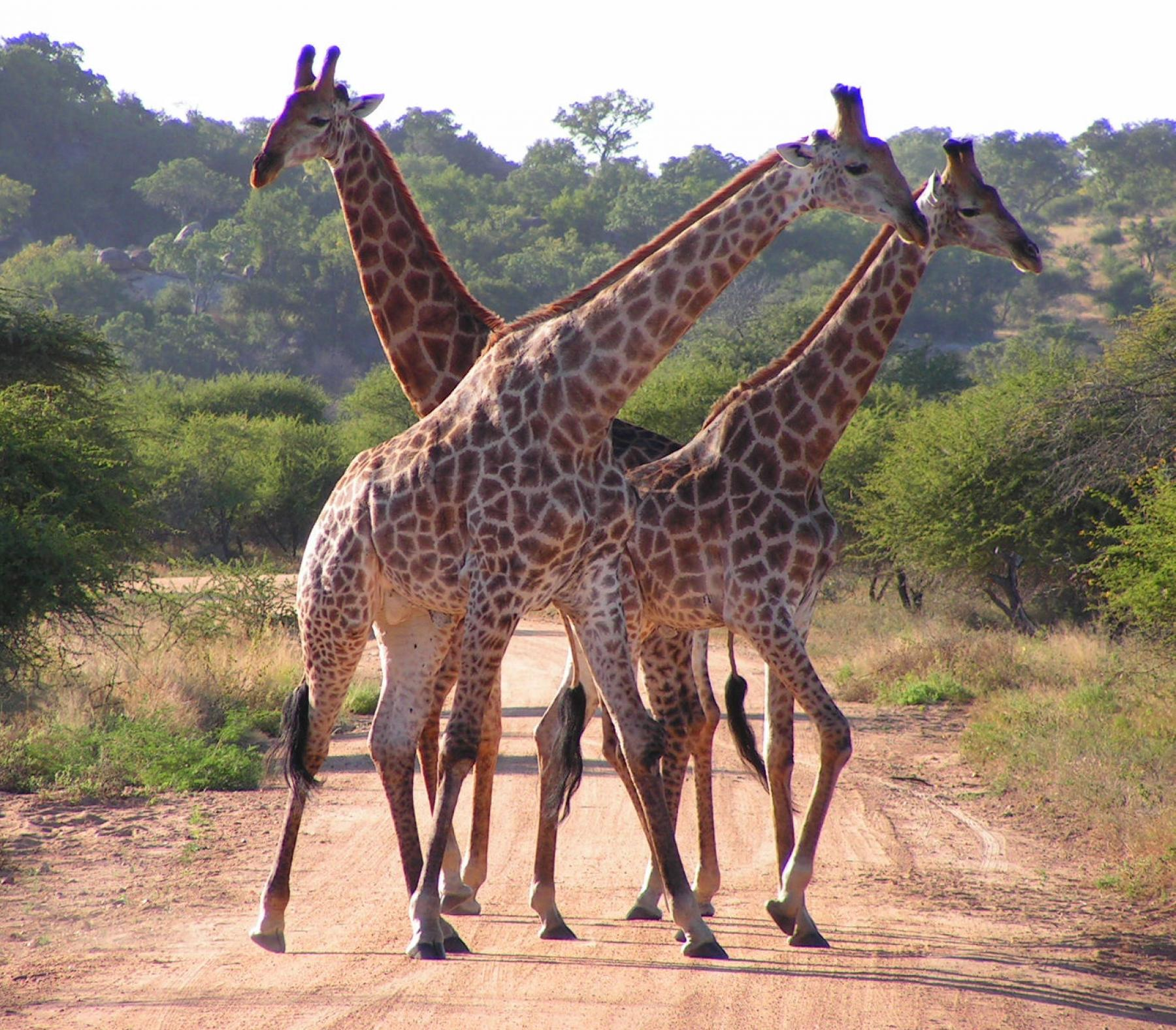 An Extraordinary African Safari and Adrenaline Excursion - 13D/12N Trip - Rerun starting at Johannesburg, Gauteng, South Africa