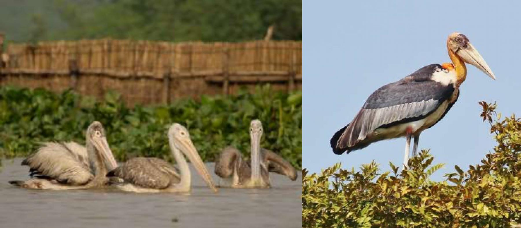 5 Day Birding Tour of  Cambodia starting at Siem Reap, Siem Reap Province, Cambodia