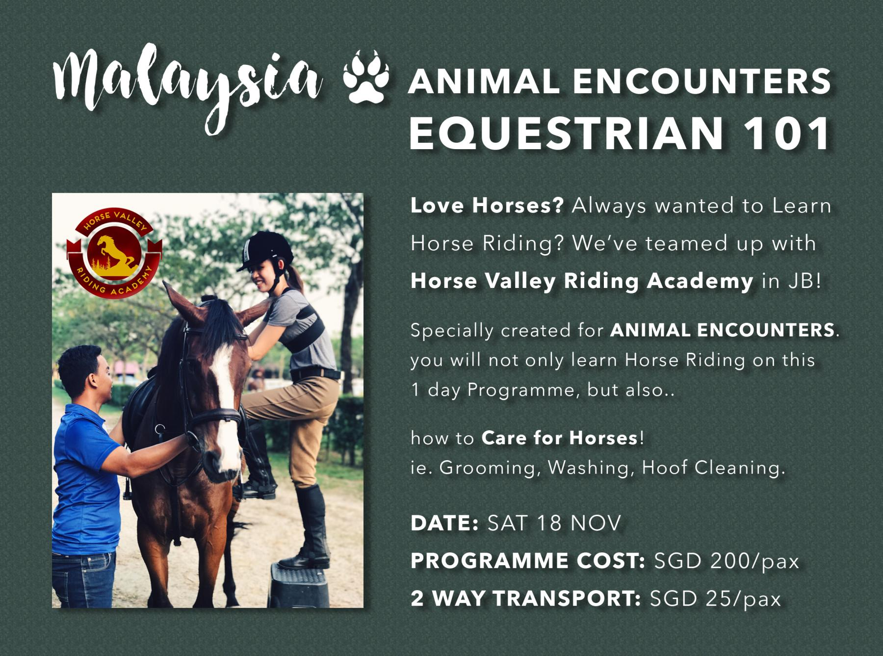 EQUESTRIAN 101 - Horse Riding & Horse Care - Day Trip to JB, Msia starting at Horse Valley Riding Academy Johor Bahru Johor Malaysia