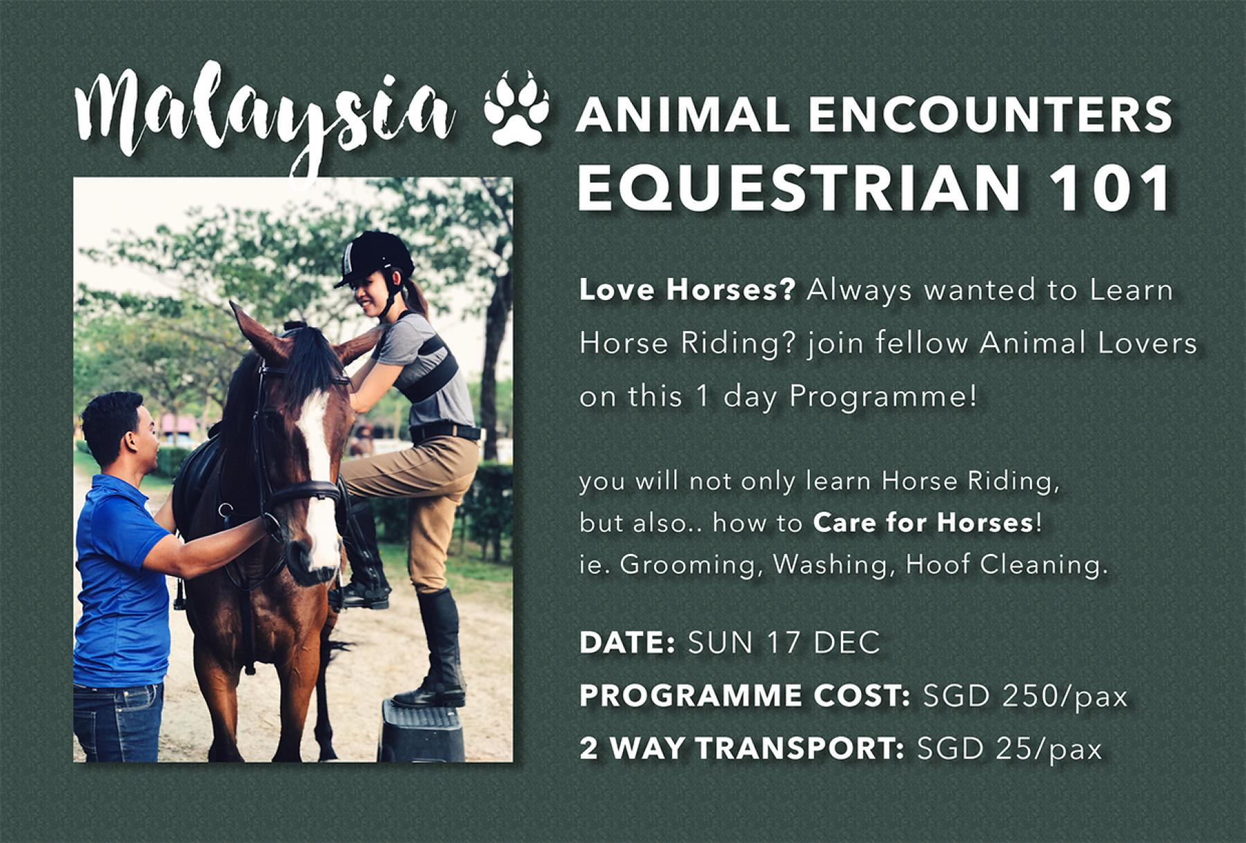 EQUESTRIAN 101 - Horse Riding & Horse Care - Day Trip to JB, Msia - Rerun starting at Horse Valley Riding Academy Johor Bahru Johor Malaysia