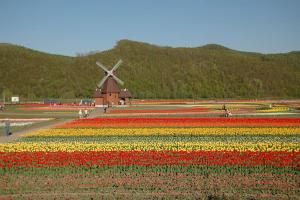 Experience a colourful spring in Hokkaido