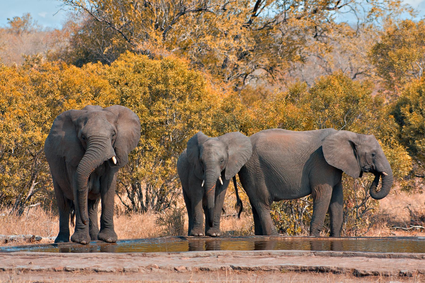 An Extraordinary African Safari and Adrenaline Excursion - 13D/12N Trip starting at Johannesburg, Gauteng, South Africa