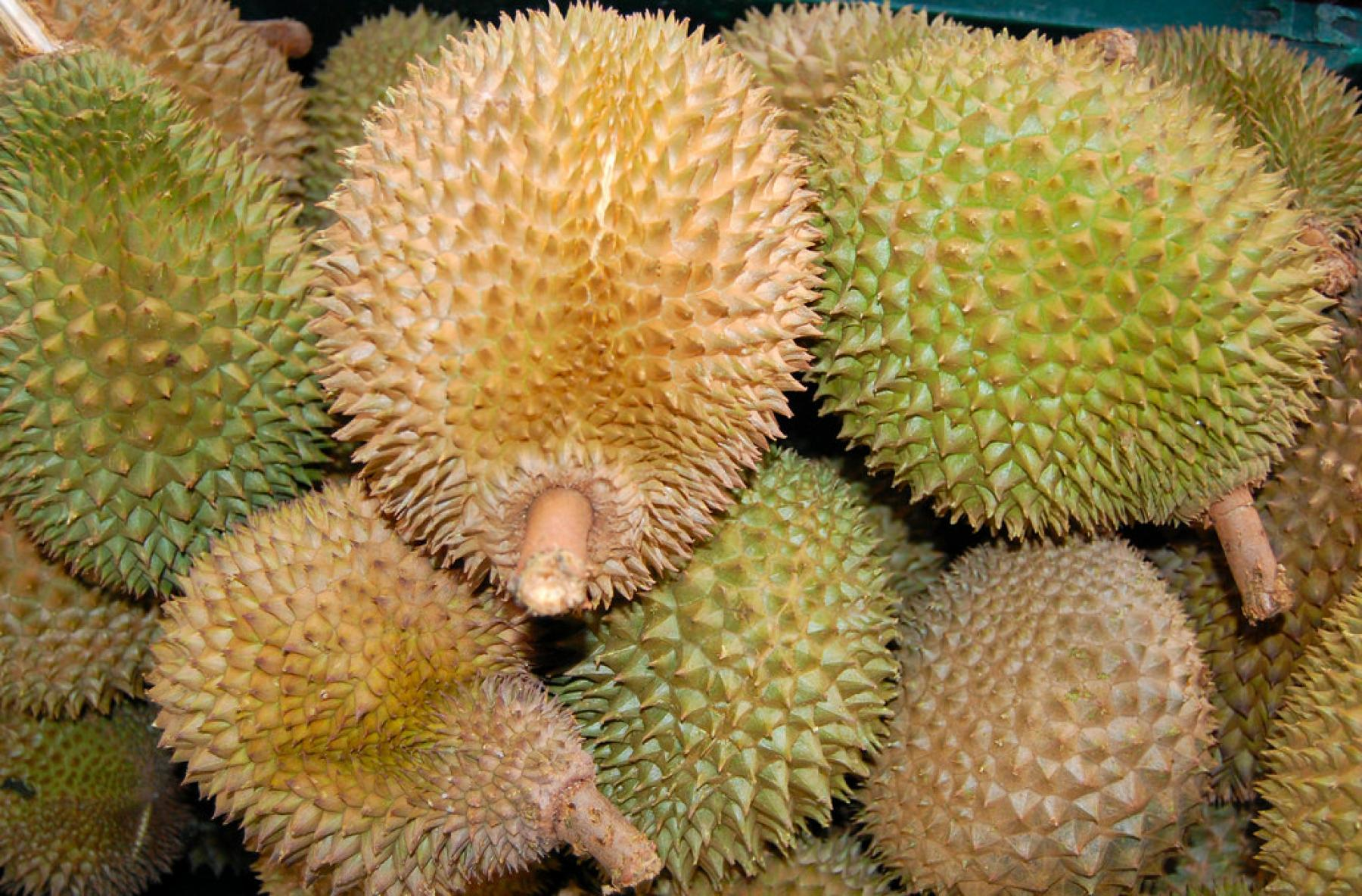Slide the waterfalls and durians feasting (2nd trip) starting at Bekok Johor Malaysia