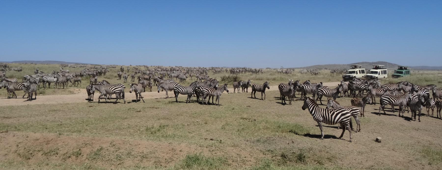 Let's explore the world's oldest ecosystem - Serengeti starting at Serengeti, Tanzania
