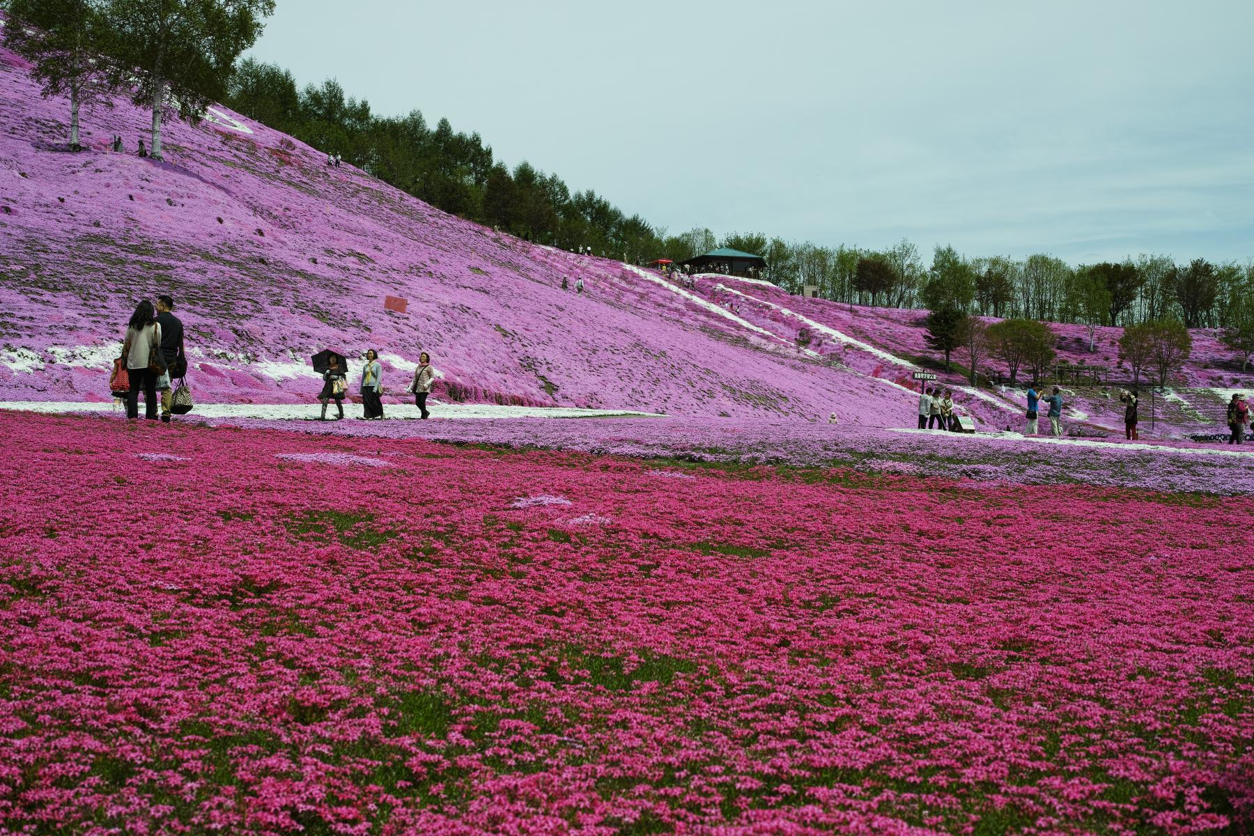 It is spring time colours with Hokkaido starting at Sapporo