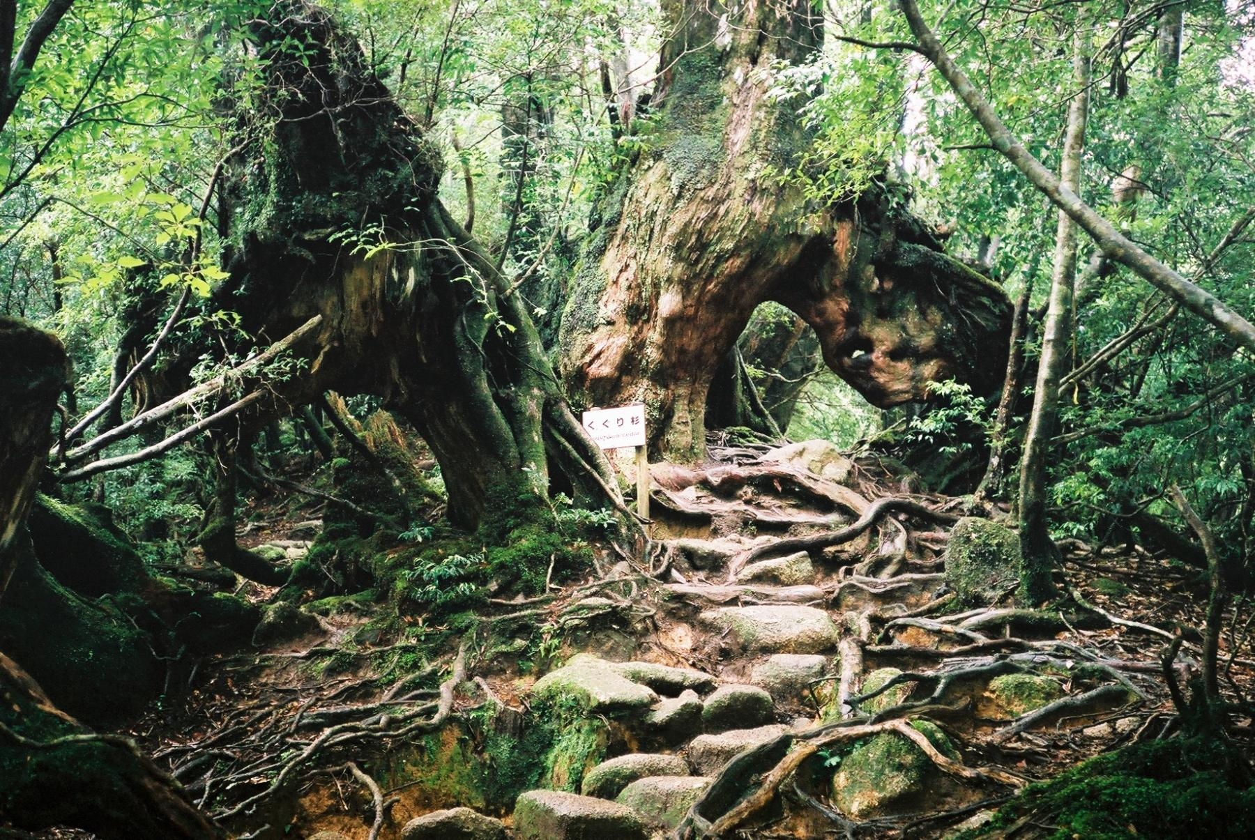 Let's go ancient forests, onsens, and volcanoes of Yakushima and Kagoshima starting at Kyushu, Japan