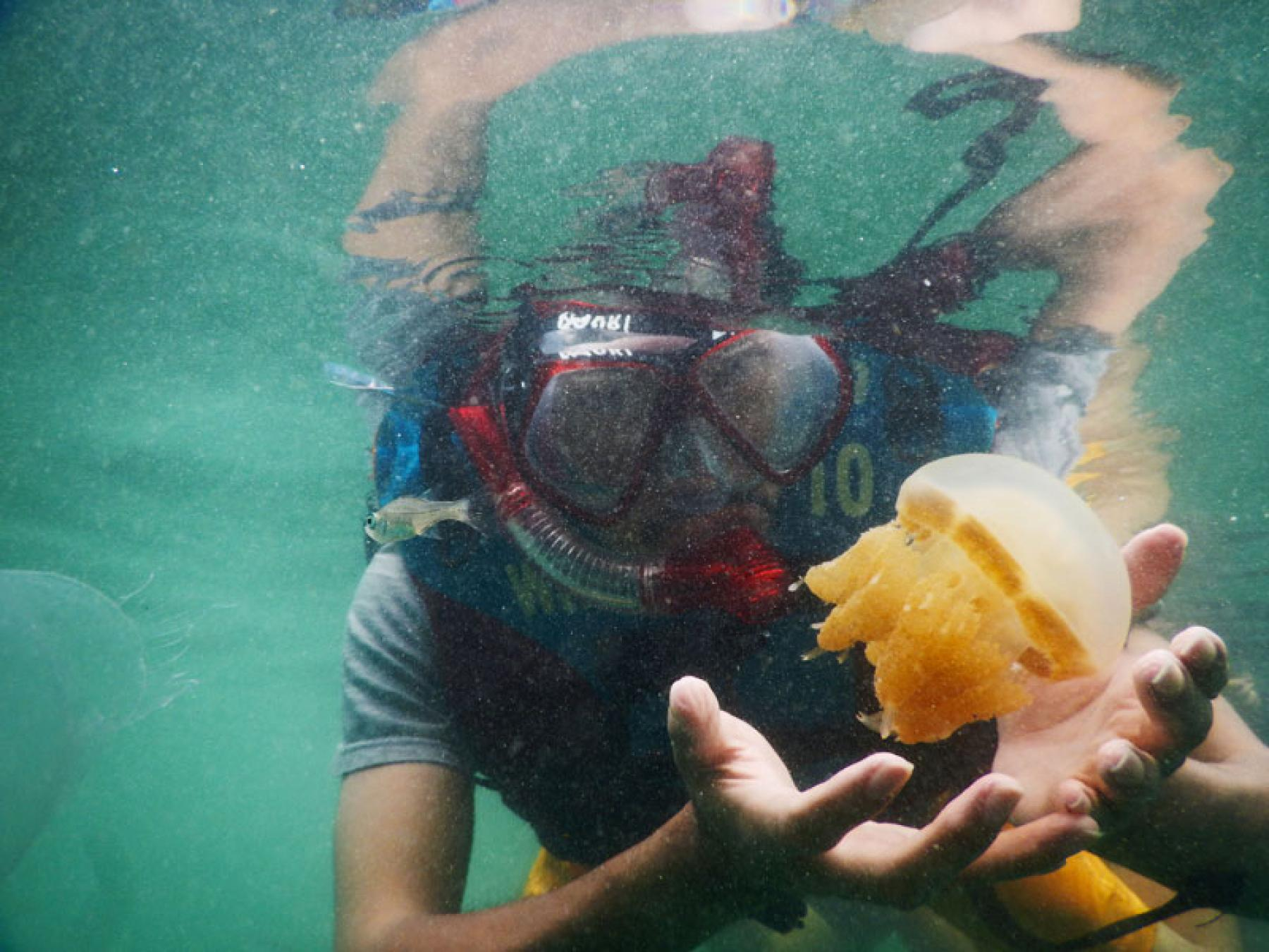 [5D4N] Derawan Islands Diving (+ Crystal Clear Lake Labuan Cermin) starting at Derawan Islands, East Kalimantan, Indonesia