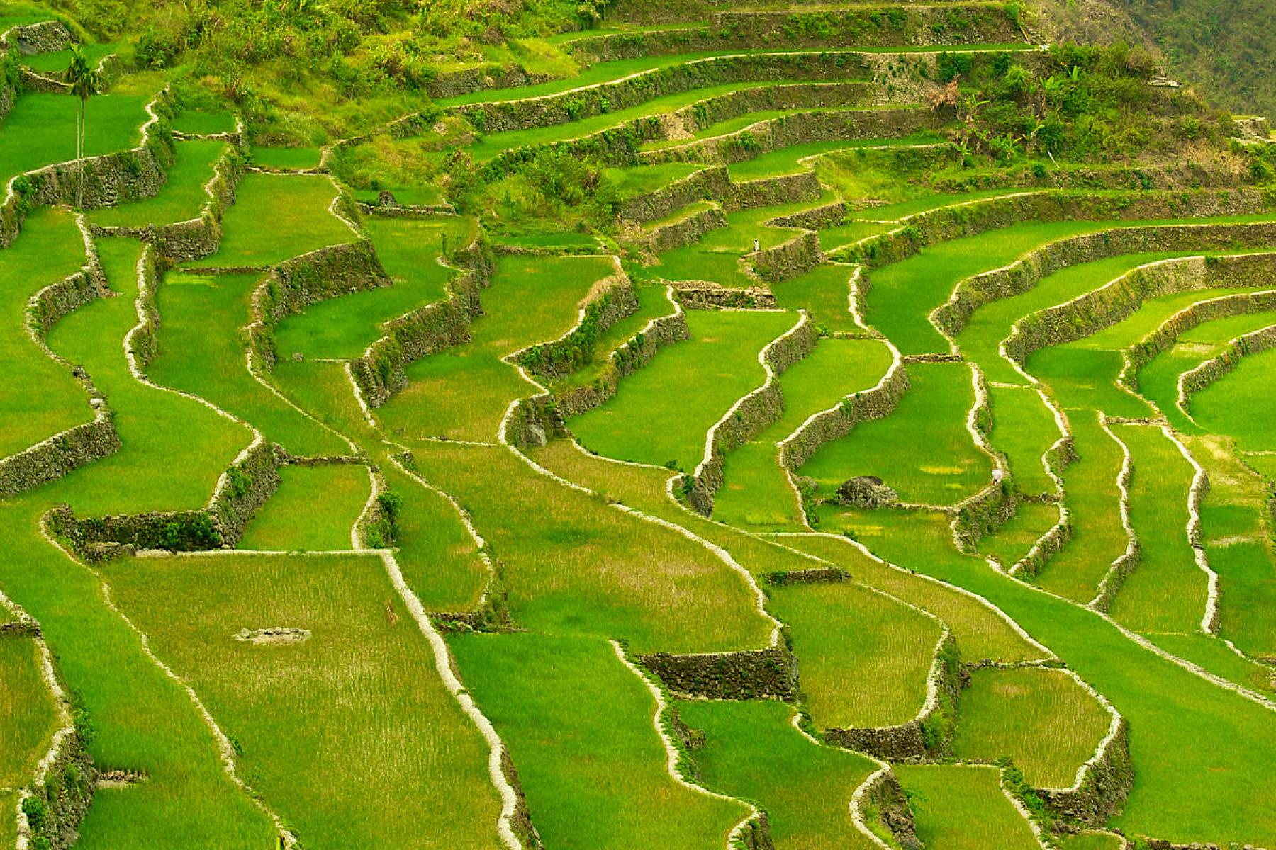 Let's Experience Luzon's Rice Terraces, Active Volcano and Unique Culture - Reru starting at Tuguegarao City, Cagayan, Philippines