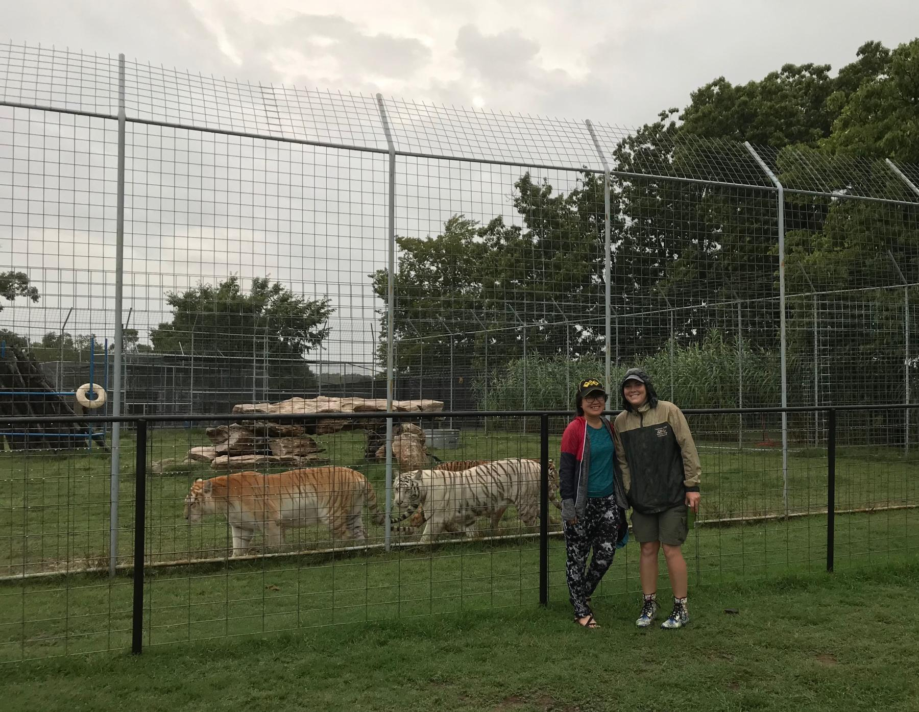 USA Big Cats - Volunteer Experience - Photo Sharing (Free Event) starting at High Street, Funan Showsuite, Singapore