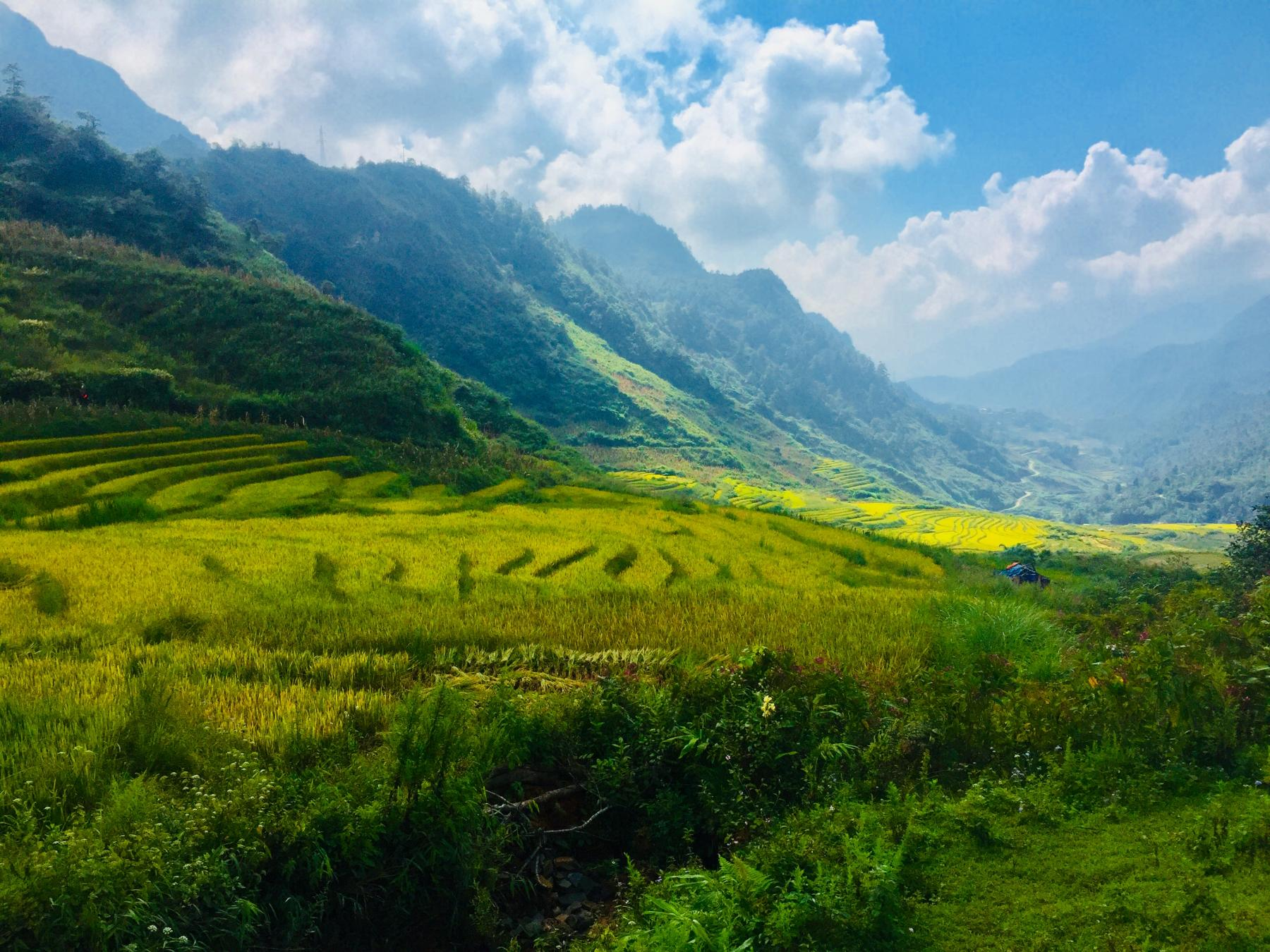 Vietnam - Let's See The Sapa Mountains, The Golden Rice Harvest and Ha Long Bay starting at Sa Pa, Lao Cai, Vietnam