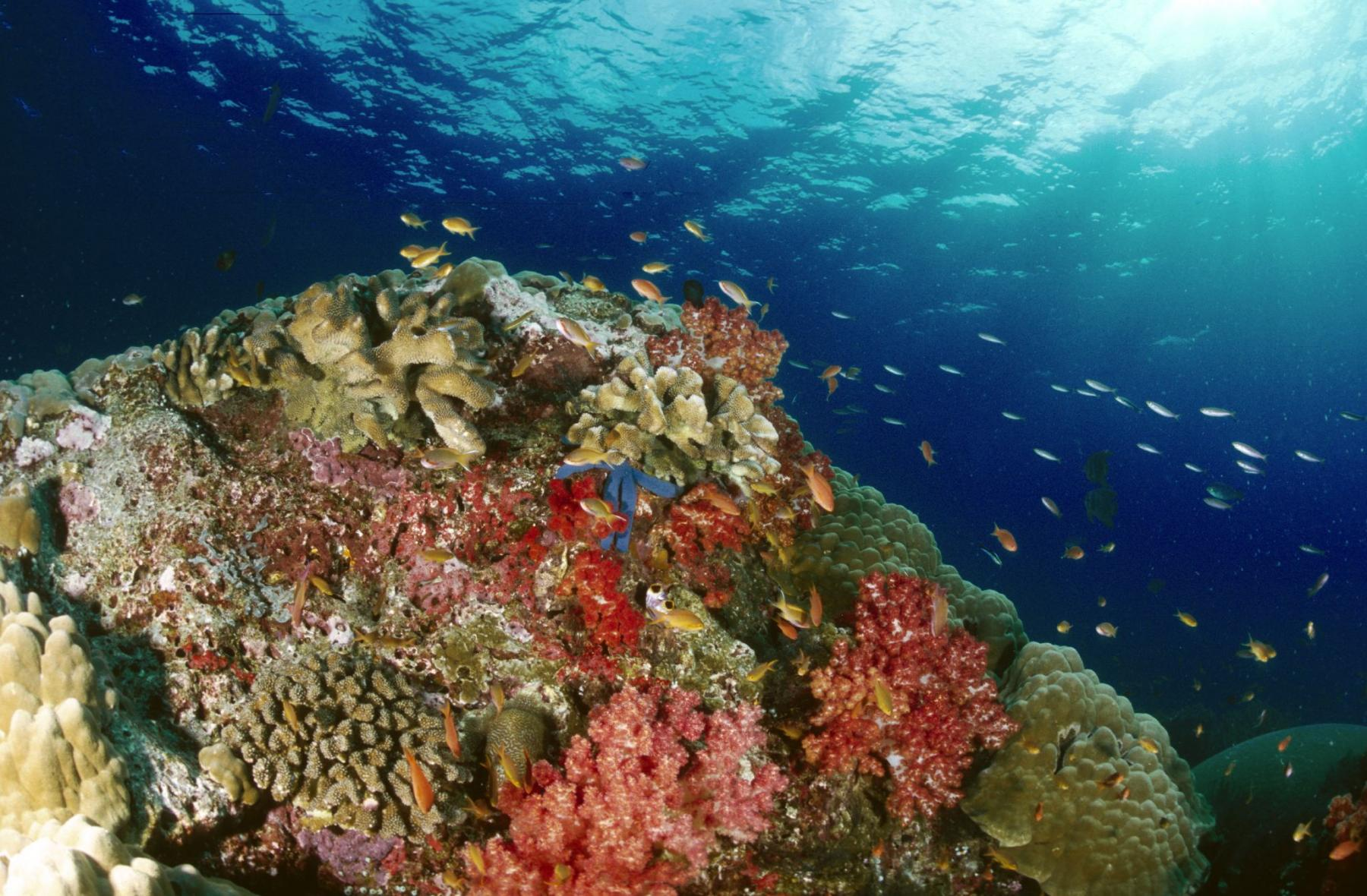 Let's Discover the World's Greatest Marine Ecosystem - Raja Ampat  starting at Sorong City, West Papua, Indonesia