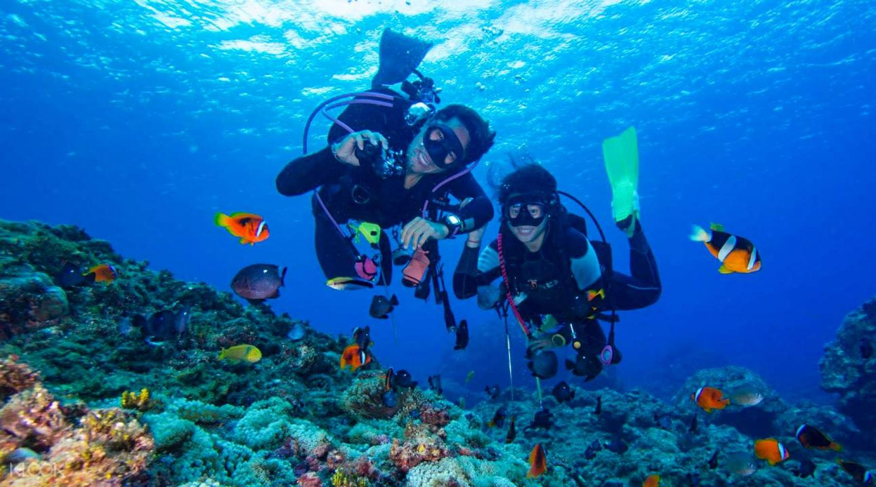 3D2N - Vesak Day, TRY DIVING, Official Padi Half Day Course @ East Tioman  starting at Tioman Island, Pahang, Malaysia