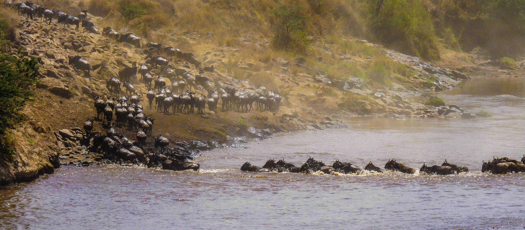 Let's experience the greatest wildlife show and migration - Masai Mara Mid-Range starting at Nairobi County, Kenya
