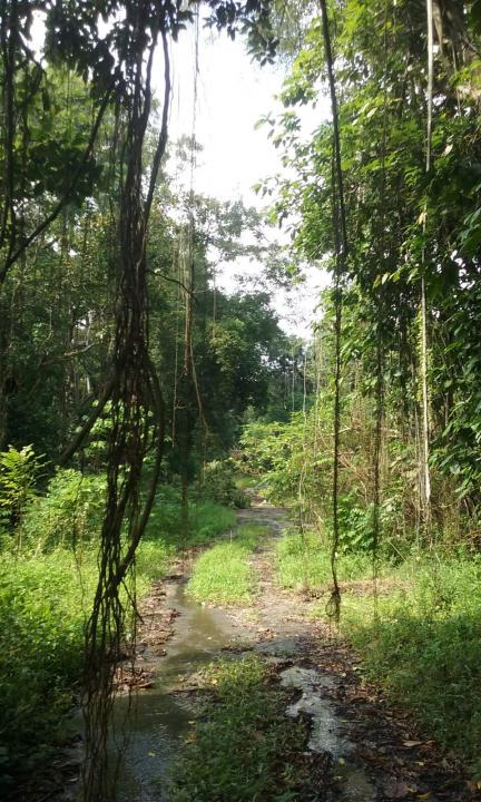 Let's explore Tengah Forest before it is gone