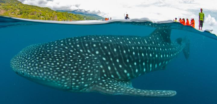 5D4N PHILIPPINES Whalesharks, ATV to Volcano, Underground Rivers, Waterfalls!