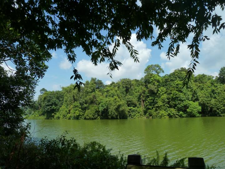 Let's Walk the Singapore's second-oldest reservoir, The Lower Peirce Reservoir.