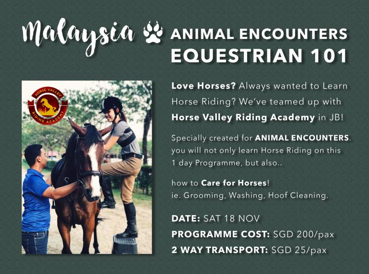 EQUESTRIAN 101 - Horse Riding & Horse Care - Day Trip to JB, Msia