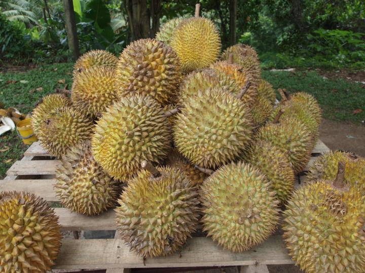 Slide the waterfalls and durians feasting