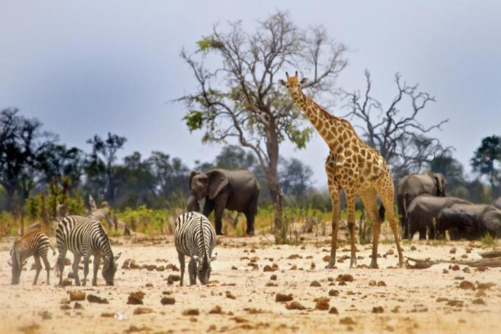 An Extraordinary African Safari and Adrenaline Excursion - 13D/12N Trip